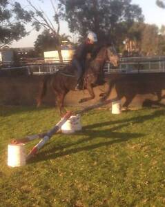 Stock Horse Type of Mare for Sale. Muchea Chittering Area Preview