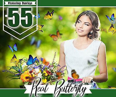 Halloween Photo Effect (55 Butterfly Photo Overlays, Realistic Natural flying, Photoshop effect, png)