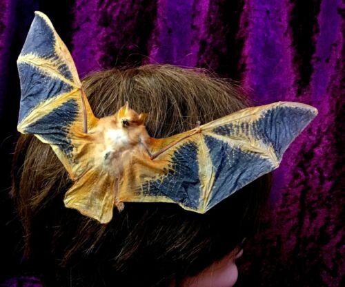 I20B Taxidermy Bat Hair Comb Barrett goth Real voodoo witch curiosities oddity