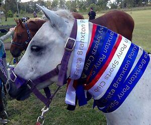 Ultimate kids Sporting Pony Ellalong Cessnock Area Preview