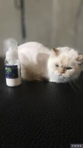 Cat grooming! Lion cuts and nail caps available !
