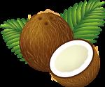 coconutreee