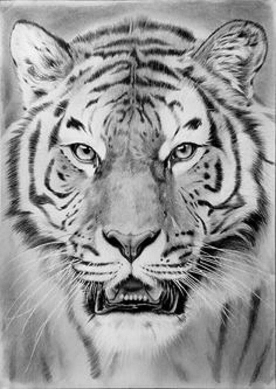 tattoovorlagen best off tiger tattoo motive flash tattoo. Black Bedroom Furniture Sets. Home Design Ideas