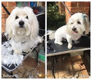 Tina's mobile dog grooming Champion Lakes Armadale Area Preview