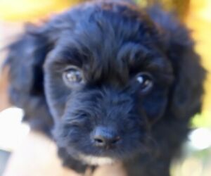 Rockhampton Region, QLD   Dogs & Puppies   Gumtree Australia Free