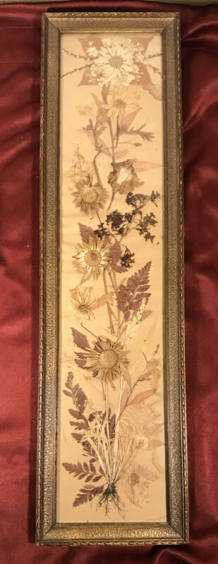 Vintage Antique Frame Homeopathic Dried Pressed Botanicals Herbs Flowers Signed