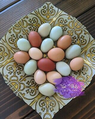12 Fresh Barnyard Mix Hatching Eggs Assorted Mix Rare Breeds Fast Free Shipping