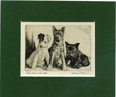 Used, ~ Fox, Scottish Terrier & Alsatian Puppies ~by Diana Thorne Genuine Vintage 1935 for sale  Shipping to Nigeria