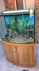 Fish Tank Wynn Vale Tea Tree Gully Area Preview