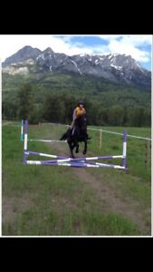Horse Jumps for Sale