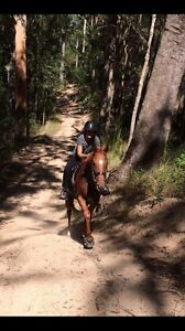 Beautiful Chestnut mare - Ride or breed Woodford Moreton Area Preview