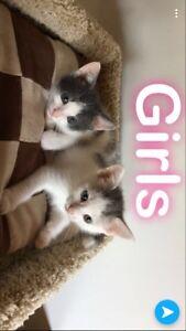 Cute kittens for adopt * forever family