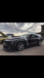 Mustang GT ** SHELBY CLONE **