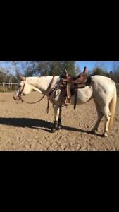 2004 Dual Registered Appaloosa Mare REDUCED!!!