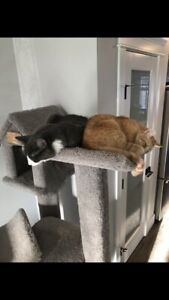 Two cats free to a good home