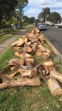 Yellow timber chopped up for firewood Blacktown Blacktown Area Preview