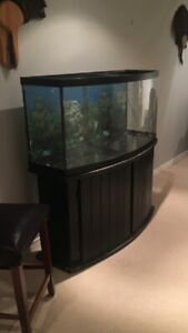 Red ear sliders and 90 gallon tank.  PRICE REDUCED