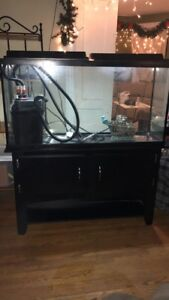 60 Gallon Fish Tank w/ Fluval 306 & Stand