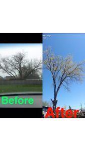 Tree hedge service