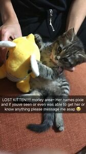 Lost Kitten!! morley area Bedford Bayswater Area Preview
