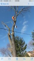 Tree removal and tree trimming service