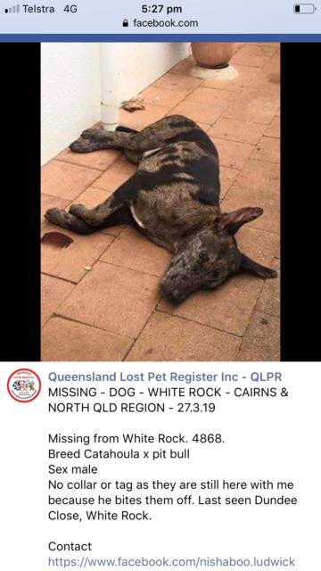 Missing dog | Lost & Found | Gumtree Australia Cairns City - White
