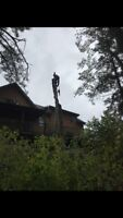 Tree & Limb Removal, Lot Clearing & Chipping Insured Free Quotes