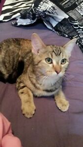 Kitty to be rehomed