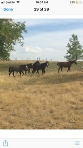 Yearlings for sale