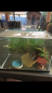 Crazy crab fish tank  Willetton Canning Area Preview
