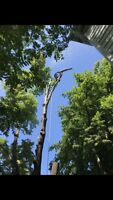 Tree & Limb Removal, Stump Grinding & Chipping Services Insured