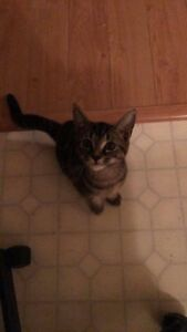 Kitty needs Rehoming! *FREE*