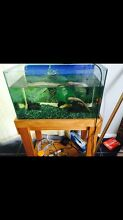 2ft fish tank West Wallsend Lake Macquarie Area Preview