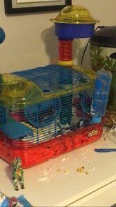 Pet Mice with Cage and Food