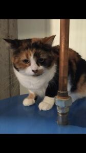 Calico Cat looking for her forever home
