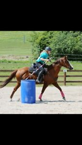 Looking for a barrel horse!
