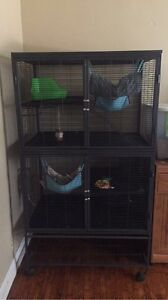 3 ferrets and ferret nation cage