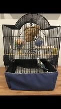 Free Budgie giveaway to a good home Mawson Lakes Salisbury Area Preview