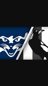 Geelong cats vs collingwood Adelaide CBD Adelaide City Preview