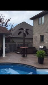 Palm Trees for sale.    10 to 16 ft tall
