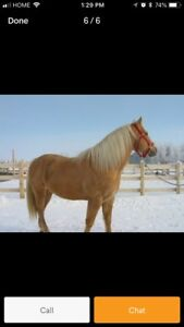 Looking for a horse to buy or lease.
