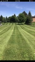 Full yard clean up and lawn care - Lawn and Order