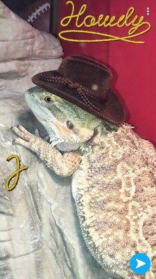 Bearded Dragon Reptile Iguana Bird Cowboy Hat Dress Up Costume (Iguana Bearded Dragon)
