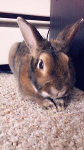 1 Year old bunny