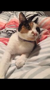 Beautiful cat free to good home Toowong Brisbane North West Preview