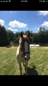 Looking for past info on horse!