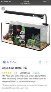 Betta trio aquarium