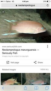 Wanted - Neolamprologus species Sydney City Inner Sydney Preview
