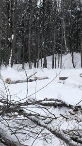 Bois de chauffage corde de bois erable merisier hêtres