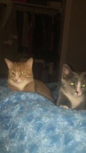 URGENT: Free Two 10 month old cats in need of good home
